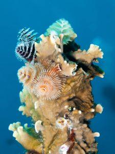 Gallery ABC CUR Curacao