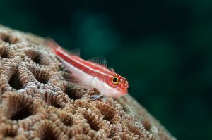 Gallery DIVE ASIA IDN Indonesia