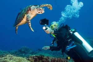 Gallery DIVE ASIA PNG