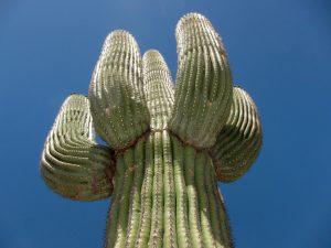 Gallery USA AZ Arizona