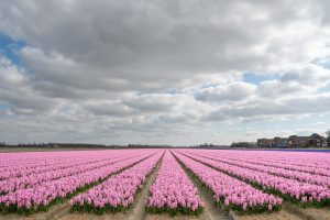 Gallery EUR NL Netherlands